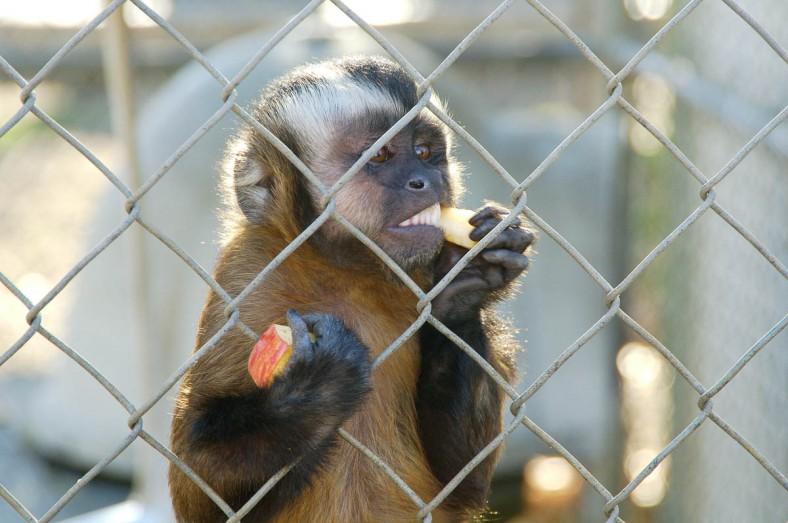 _DSC2299 Monkey v2