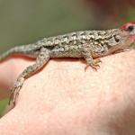 1_DSC_2057-geckobird