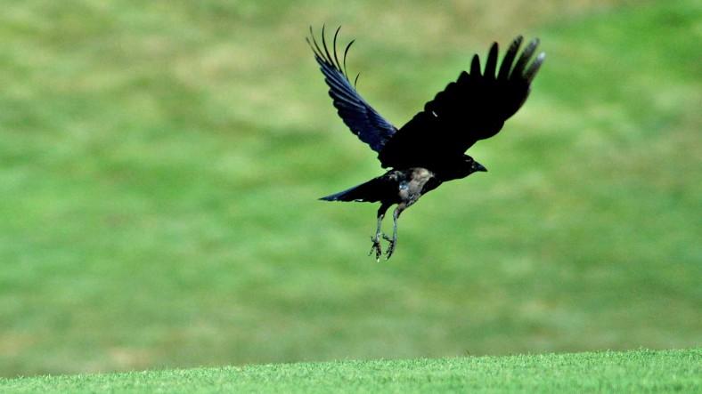 xp3-dot-us_DSC_8725 crow takes off