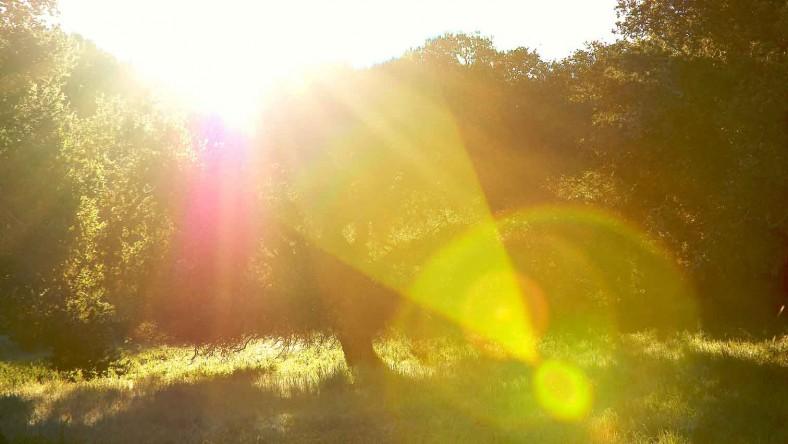 xp3-dot-us_DSC_0540 tree in light at ranch (2)